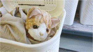Pikku kissa pesukorissa